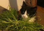 Wildfee's  Norwegische Waldkatzen
